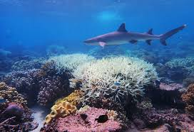 Huh? UNESCO Committee Considers Downgrading Australia's Great Barrier Reef World Heritage Status Over Climate Change